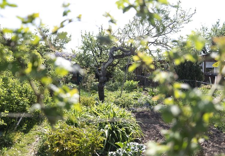 Bäume in einem Garten